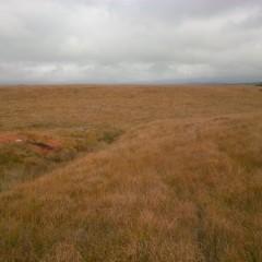Spooner's Moor, Exmoor